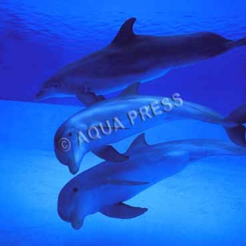 Photographe - AQUA PRESS - photo 21