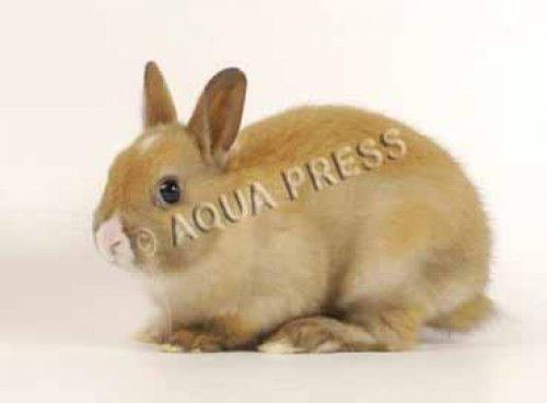 Photographe - AQUA PRESS - photo 8