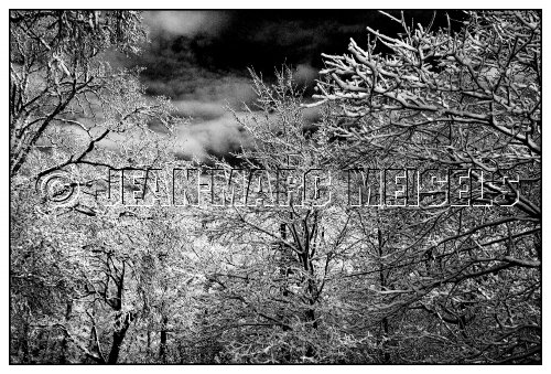 Photographe - Jean-Marc Meisels - photo 30